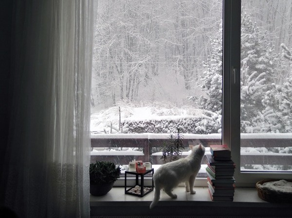 Winter window glazing: how to keep your home warm | Your Price Windows